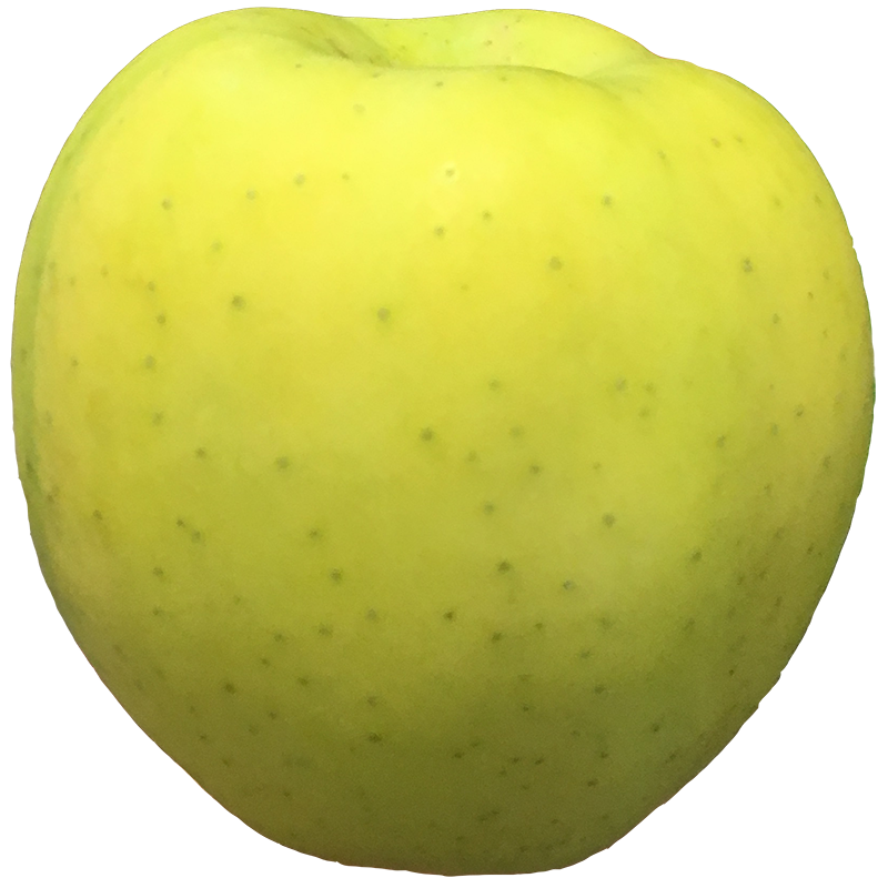 APPLE (Golden) 1LB