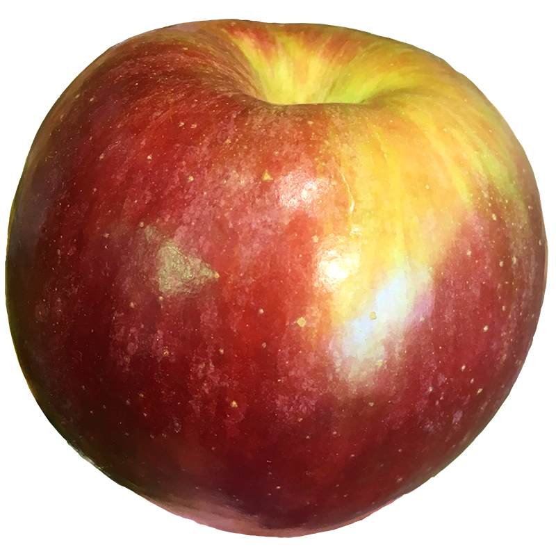 APPLE (Mcintosh) 1LB