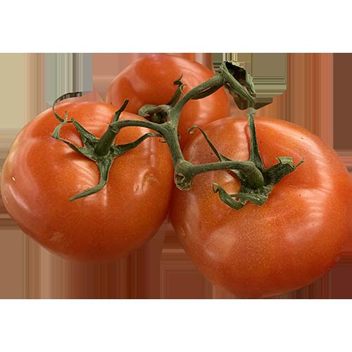 Stem Tomato
